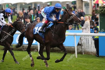 Stock Photo of DUBAI ICON (12) ridden by Josephine Gordon and trained by Saeed bin Suroor winning The Coldstream Guards Association Cup over 1m 2f (£15,600) for Godolphin during the York Coral Sprint Trophy meeting at York Racecourse, York