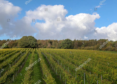 Bolney Wine Estate in Haywards Heath, Sussex where Camilla Duchess of Cornwall, President of Wine GB, visited their new winery.