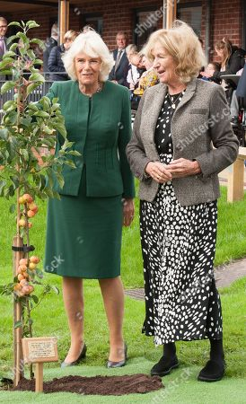 Editorial image of Camilla Duchess of Cornwall visit to Sussex, UK - 17 Oct 2019