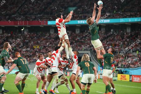 Stock Image of Japan's James Moore and South Africa's Pieter-Steph du Toit are is lifted to catch the ball at a line out