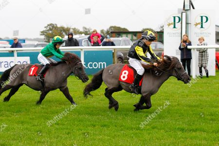 Mystic Dreamer and Alfie Daiper win the Bob Champion Cancer Trust Shetland Pony Derby at Plumpton from Cranford Fantastic and Lucas Murphy.