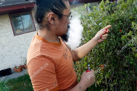 Stock Photo of Scott Bloom of Minneapolis, vapes with an electronic cigarette as he picks ripe tomatoes from a plant outside his home. Bloom said he switched to vaping after experiencing allergies from cigarette smoke