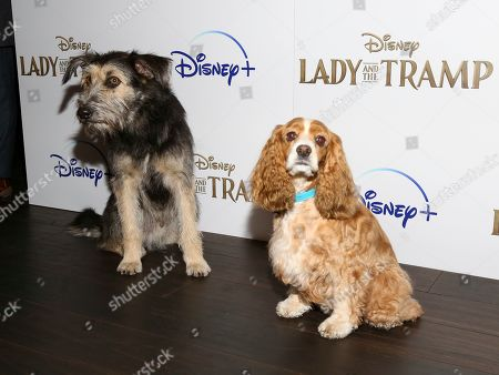 Lady Tramp Film Premiere Arrivals New York Stock Photos Exclusive Shutterstock
