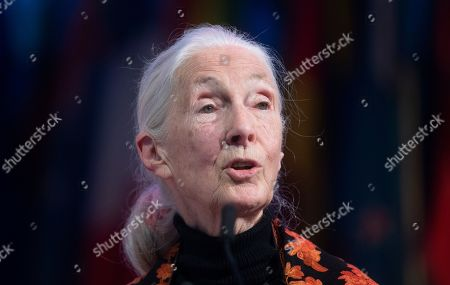 Stock Image of Anthropologist and UN messenger of Peace, Dr. Jane Goodall  speaks during a session at the One Young World Summit in the Methodist Hall in London, Britain, 23 October 2019. Over 2,000 young people from over 190 countries gathered for the One Young World Summit, a global forum for young leaders, aiming to create the next generation of more responsible and effective leaders.