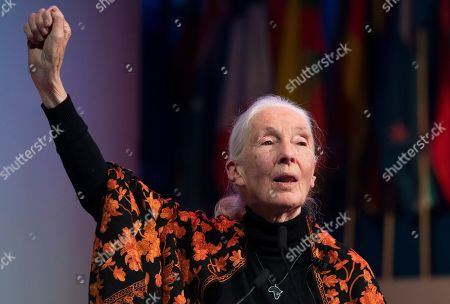 Stock Picture of Anthropologist and UN messenger of Peace, Dr. Jane Goodall  speaks during a session at the One Young World Summit in the Methodist Hall in London, Britain, 23 October 2019. Over 2,000 young people from over 190 countries gathered for the One Young World Summit, a global forum for young leaders, aiming to create the next generation of more responsible and effective leaders.
