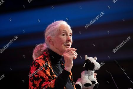 Anthropologist and UN messenger of Peace, Dr. Jane Goodall  speaks during a session at the One Young World Summit in the Methodist Hall in London, Britain, 23 October 2019. Over 2,000 young people from over 190 countries gathered for the One Young World Summit, a global forum for young leaders, aiming to create the next generation of more responsible and effective leaders.