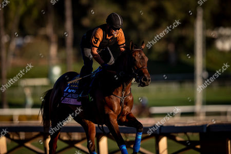 , 2019, Arcadia, California, USA: OCT 25: Breeders' Cup Juvenile Fillies entrant Bast, trained by Bob Baffert, gallops at Santa Anita Park in Arcadia, California on Evers/Eclipse Sportswire/Breeders' Cup/CSM