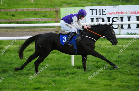 Stock Image of WEXFORD FORTUNE STREET and Barry O'Neill win the Jim Whitty Memeorial Flat Race.