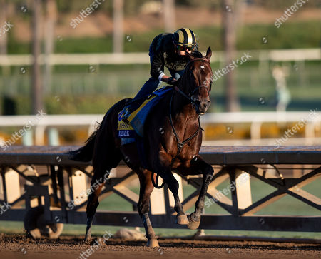 Stock Photo of , 2019, Arcadia, California, USA: OCT 28: Breeders' Cup Classic entrant McKinzie, trained by Bob Baffert, works at Santa Anita Park in Arcadia, California on Evers/Eclipse Sportswire/Breeders' Cup/CSM