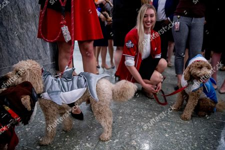 "Jacqueline Sumpter dresses her mini golden doodle Rosey, right, in a shark costume along with Sen. Deb Fischer's dog Fred, left, in support of the Washington Nationals during a ""Bipawtisan Dog Costume Parade"" for Halloween on Capitol Hill in Washington"