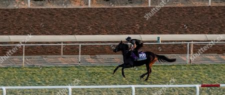 , 2019, Arcadia, California, USA: Breeders' Cup Juvenile Turf Sprint entrant A'Ali, trained by Simon Crisford, exercises in preparation for the Breeders' Cup World Championships at Santa Anita Park in Arcadia, California on October 31, 2019. John Voorhees/Eclipse Sportswire/Breedersâ?? Cup/CSM