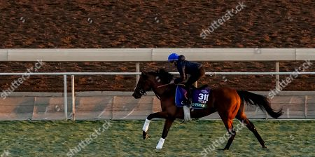 , 2019, Arcadia, California, USA: Breeders' Cup Turf entrant Old Persian, trained by Charlie Appleby, exercises in preparation for the Breeders' Cup World Championships at Santa Anita Park in Arcadia, California on October 31, 2019. John Voorhees/Eclipse Sportswire/Breedersâ?? Cup/CSM