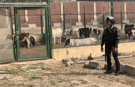 An Egyptian policeman stands guard inside Tora prison in Cairo, Egypt, 11 November 2019. According to reports, a delegation comprising members of Human Rights commission, parliamentarians and journalists visited Tora Prison ahead of the Universal Periodic Review (UPR) of Egypt before the UN Human Rights Council scheduled for 13 November and after a UN report on 08 November claimed 'inadequate prison conditions' may have led to the death of ousted president Mohamed Morsi.