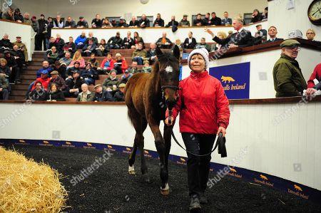 Editorial image of Horse Racing - 12 Nov 2019