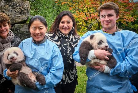 Editorial photo of Twin Panda cubs naming ceremony, Brussels, Belgium - 14 Nov 2019