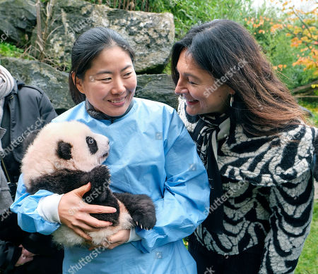 Editorial picture of Twin Panda cubs naming ceremony, Brussels, Belgium - 14 Nov 2019
