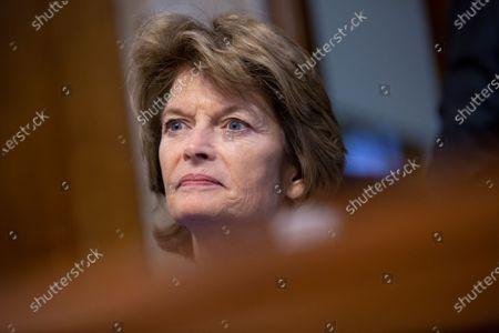Editorial picture of Senate Committee nomination hearings, Washington DC, USA - 14 Nov 2019