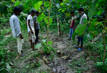 Villagers showing a spot where an elephant named after Osama bin Laden has trampled a woman to death, at Matia village, in Goalpara district of Assam in India