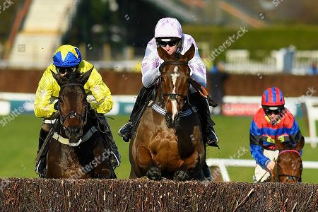 Winner of The Download The Free At The Races App SteepleChase Champagne Court ridden by Nick Schofield and trained by Jeremy Scott during Horse Racing at Plumpton Racecourse on 18th November 2019