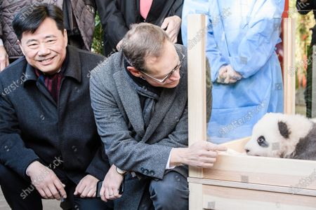 China Ambassador to Germany Wu Ken (L) and Berlin Governing Mayor Michael Mueller next to Meng Yuan (R), one of the two recently born twin panda cubs, during their official presentation at the Berlin Zoo in Berlin, Germany, 09 December 2019. Giant Panda Meng Meng gave birth to the two baby pandas on 31 August 2019, to father Jiao Qing. Meng Meng and Jiao Qing are on loan from China for 15 years.15 years.