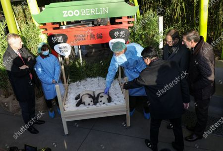 Stock Picture of China Ambassador to Germany Wu Ken (C) points to the newly born panda cubs next to Berlin Governing Mayor Michael Mueller (2-R), Berlin Zoo director Andreas Knieriem (R) and Zoo Berlin supervisory board chair Frank Bruckmann (L) at Zoo Berlin, in Berlin, Germany, 09 December 2019. Giant Panda Meng Meng gave birth to the two baby pandas on 31 August 2019, to father Jiao Qing.