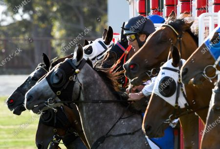 Stock Picture of Jockey Damien Oliver rides Sydney Blue out of the barriers in race 6, The Big Screen Company Handicap, during Midweek Twilight Races at Ladbrokes Park in Melbourne, Victoria, Australia, 11 December 2019 (issued 12 December 2019).
