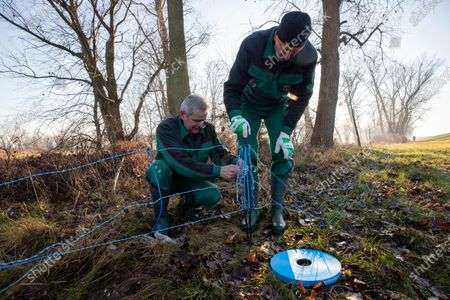 Stock Picture of Forest workers Michael Wolff (L) and Brose Steffen (R) set up an electric wildlife fence on the border between eastern Germany and western Poland in Guben, Brandenburg, Germany, 20 December 2019. The German state of Brandenburg, in close coordination with the districts, has build a temporary electric wildlife fence to prevent wild boars to cross the Germany from Poland, as the risk of the African Swine Fever (ASF) from infected animals is getting higher.