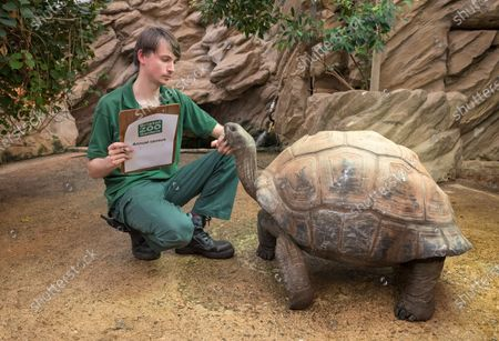 Zoo keeper Adam Davis with Aldabran Giant Tortoises