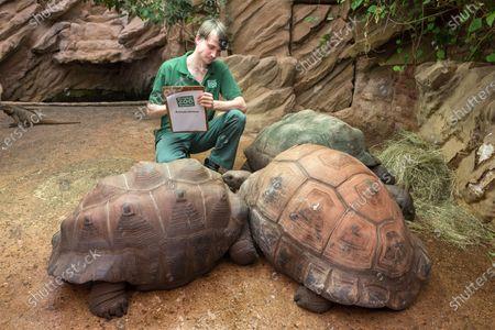 Stock Photo of Zoo keeper Adam Davis with Aldabran Giant Tortoises