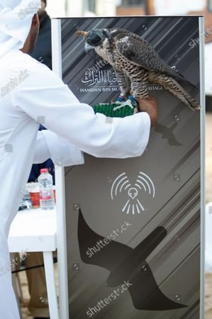 A man checks his falcon's information in front of a digital device during the Fazza Championship for Falconry in Dubai, United Arab Emirates (UAE), 30 December 2019. The Fazza Championship for Falconry is sponsored by Dubai's Crown Prince Sheikh Hamdan bin Mohammed bin Rashid Al Maktoum. Falconry, locally known as 'kanas' is an integral part of the heritage of the UAE. The falconry tournaments run until the end of March 2020.