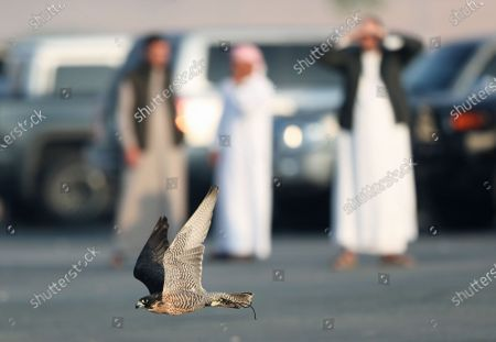 People watch a gyrfalcon flying during the Fazza Championship for Falconry in Dubai, United Arab Emirates (UAE), 30 December 2019. The Fazza Championship for Falconry is sponsored by Dubai's Crown Prince Sheikh Hamdan bin Mohammed bin Rashid Al Maktoum. Falconry, locally known as 'kanas' is an integral part of the heritage of the UAE. The falconry tournaments run until the end of March 2020.