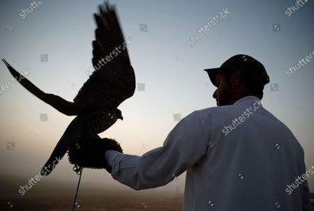 A man prepares to release his gyrfalcon during the Fazza Championship for Falconry in Dubai, United Arab Emirates (UAE), 30 December 2019. The Fazza Championship for Falconry is sponsored by Dubai's Crown Prince Sheikh Hamdan bin Mohammed bin Rashid Al Maktoum. Falconry, locally known as 'kanas' is an integral part of the heritage of the UAE. The falconry tournaments run until the end of March 2020.
