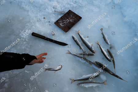 Sophie Woods tosses a fish while ice fishing on the Bering Sea, near Toksook Bay, Alaska. The first Americans to be counted in the 2020 Census starting Tuesday, Jan. 21, live in this Bering Sea coastal village. The Census traditionally begins earlier in Alaska than the rest of the nation because frozen ground allows easier access for Census workers, and rural Alaska will scatter with the spring thaw to traditional hunting and fishing grounds