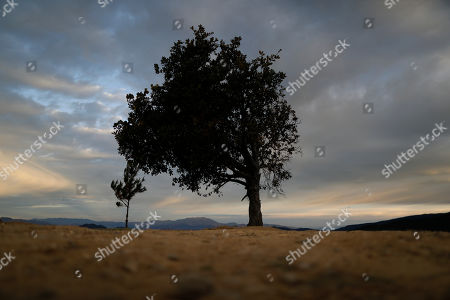 A tree sits at the edge of a lookout point over Angangueo, Michoacan state, Mexico, . As community activist Homero Gomez Gonzalez was laid to rest Friday, farmer Raul Garcia Gonzalez recalled how in 2019 Gomez Gonzalez led hundreds of communal farmers in a demonstration in the nearby town of Angangueo to demand the town pay for water it receives from the mountain streams that are born on their properties