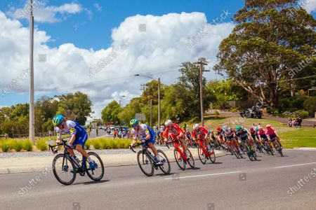 The peloton rolls thru a roundabout during the 2020 Cadel Evans Great Ocean Road Race