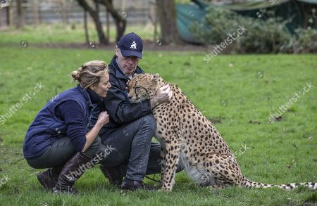 Editorial picture of Aspinall Foundation cheetah brothers to be relocated from UK to South Africa, Howletts Wild Animal Park, Kent, UK - 03 Feb 2020
