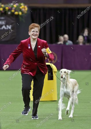Editorial picture of 144th Annual Westminster Kennel Club Dog Show, New York, USA  - 10 Feb 2020