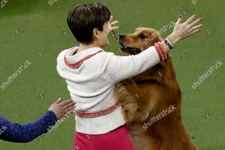Daniel, a golden retriever celebrates with his handler after winning the sporting group at the Westminster Kennel Club Dog Show, in New York