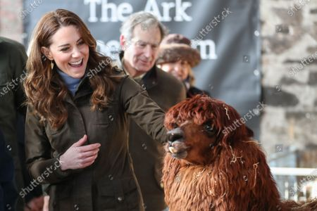 Catherine Duchess of Cambridge has an encounter with an Alpaca during a visit to The Ark Open Farm in Newtownards