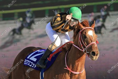 , Tokyo, Mozu Ascot with Christophe Lemaire up wins the February Stakes at Fuchu racecourse, JPN.