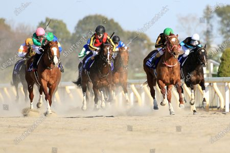 , Tokyo, Mozu Ascot (second from right) with Christophe Lemaire up wins the February Stakes at Fuchu racecourse, JPN.
