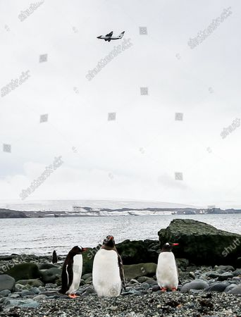 Editorial image of Scientists study how increasing tourism is impacting the Frozen Continent, King George Island, Antarctica - 16 Jan 2020