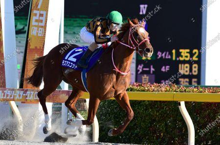 Editorial photo of Horse Racing - 23 Feb 2020