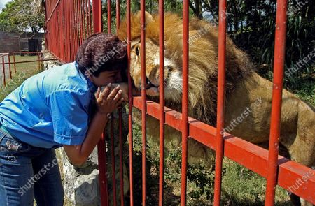 The lion 'Jupiter' is seen next to the owner of Villa Lorena Ana Julia Torres,in a shelter for animals confiscated from drug traffickers, circuses and wildlife dealers, in Cali, Colombia, 10 January 2007 (issued 27 February 2020). 'Jupiter' who was known for 'kissing' his carer, and who in 2017 the environmental authorities decided that there were no adequate conditions for the 190 animals that remained in the shelter Villa Lorena and were confiscated, including 'Jupiter'. The lion was taken to the Los Caimanes Zoo in Buenavista, Colombia on 29 March 2019 where he was later discovered ill and neglected on 20 February 2020 by his old caretaker.