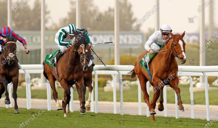 Editorial picture of Horse Racing - 29 Feb 2020