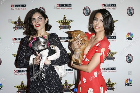 Editorial image of Beverly Hills Dog Show, Arrivals, Pomona, USA - 29 Feb 2020
