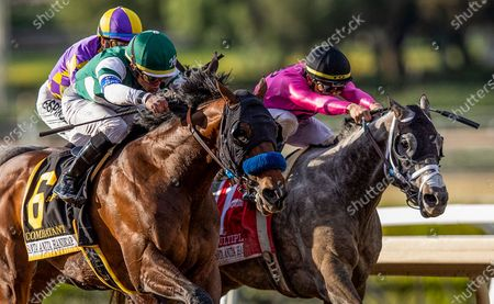 Stock Image of , 2020, Arcadia, California, USA: : Combatant with Joel Rosario uo (left) defeats Midcourt with Victor Espinoza and Multiplier with Tyler Gaffalione to win the Santa Anita Handicap at Santa Anita Park in Arcadia, California on Evers/Eclipse Sportswire/CSM