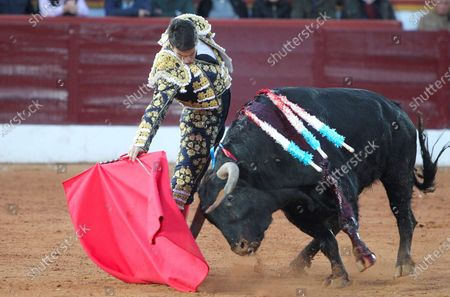 Stock Image of Spanish bullfighter Jose Maria Manzanares fights with his second bull during the 'Feria Taurina de Olivenza' bullfighting held in Badajoz, Spain, 08 March 2020.