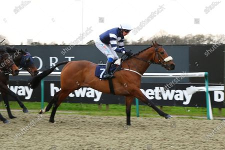 HIGHLAND ACCLAIM ridden by James Sullivan 1st The Heed Your Hunch at Betway Handicap Stakes at Lingfield Park Copyright: Ian Headington/racingfotos.com