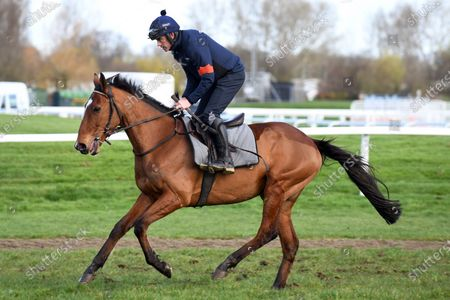 , Cheltenham, Bapaume with Ruby Walsh up at morning track work at Cheltenham racecourse, GB.